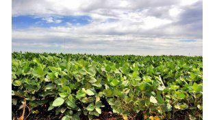 Monocultivo. El área sojera subirá por la fuerte caída de la de maíz. Medio millón de hectáreas quedarán vacías.