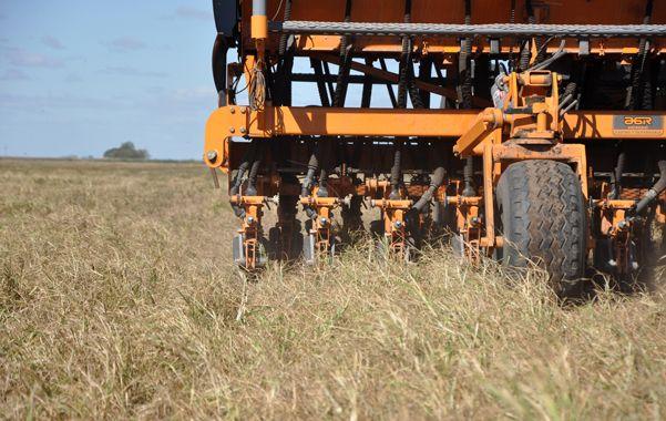 Manejo. Los especialistas vuelven a preguntarse sobre la conveniencia de la siembra directa ante la labranza convencional