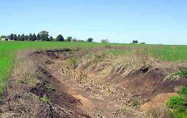 Costos. Un suelo degradado requiere mayor fertilizantes y herbicidas porque las malezas compiten con el cultivo.