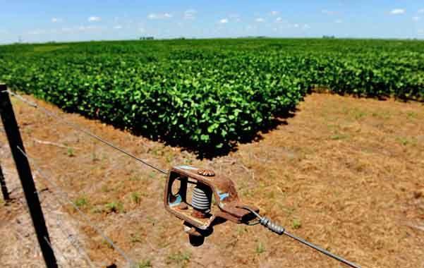 Monocultivo. El modelo agrícola pampeano actual presenta tensiones como la extrema agriculturización y la expulsión de la ganadería a otras zonas.