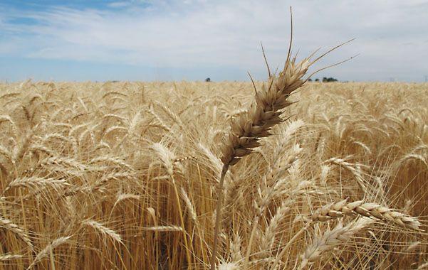 Grano grueso. El buen tiempo permitió finalizar la cosecha de soja.
