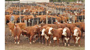 Estrategia. El problema sanitario de la ganadería no es cuestión de escala