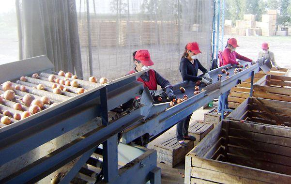 En observación. La certificadora rosarina monitoreó la producción de cebollas orgánicas que buscaban certificación para una demanda puntual.
