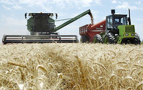 Mejora. Especialistas prevén una mayor intención de siembra de trigo.