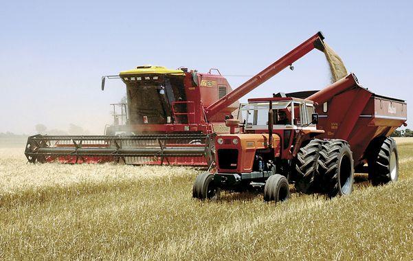 Cosecharás tu siembra. La producción de trigo en la actual campaña retrocedió hasta las 9 millones de toneledas.