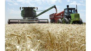 En alza. La producción triguera será mas elevada gracias a mejores rindes.