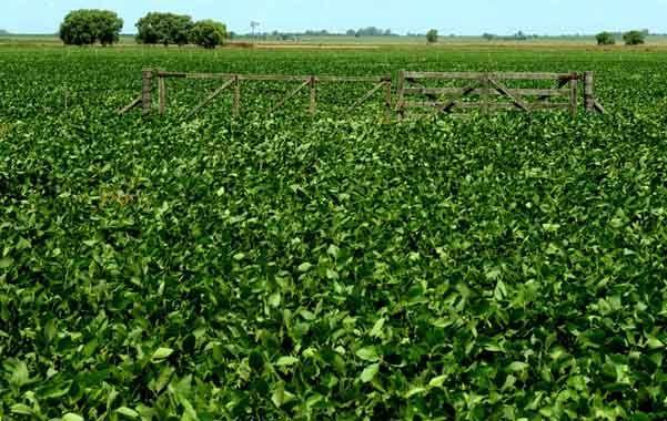 En alza. Los futuros de soja en Chicago sumaron varias subas consecutivas.