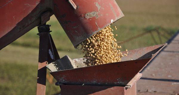 Sequía versus precios: ¿Seguirá la soja encima de los u$s 500?