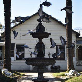 concejales promueven el uso de anticonceptivos para controlar la superpoblacion de palomas
