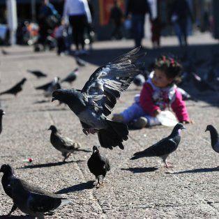 Las palomas son consideradas una plaga.