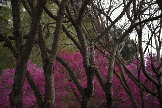 Las flores comienzan a copar el paisaje del Parque Urquiza.