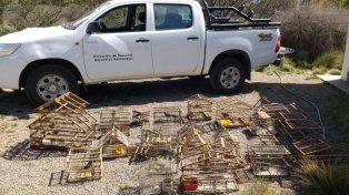 Mendoza. Aves recuperadas el fin de semana por Recursos Naturales.