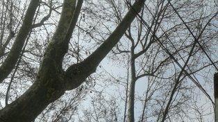 La EPE realiza cortes de luz por tareas de poda de árboles en distintos barrios de la ciudad