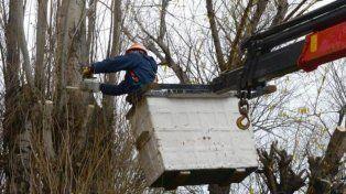 La EPE realiza un corte programado en barrio Parque por poda de árboles