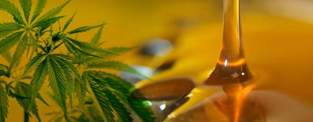 El extracto de aceite de cannabis fue incorporado por Iapos en toda la provincia.