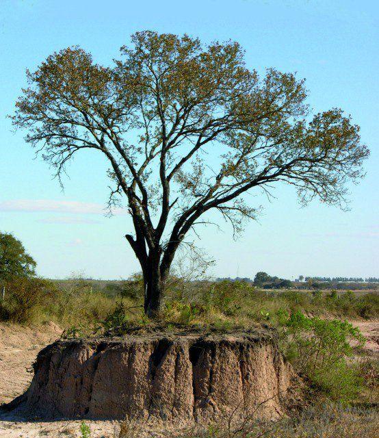 Vegetación nativa de la región del Espinal.