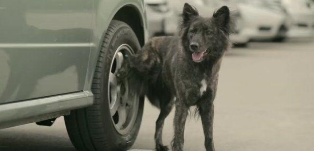 Resultado de imagen para perro meando rueda