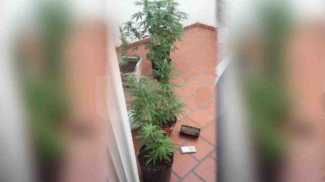 Se peleó con el novio y denunció a la policía que tenía plantas de marihuana en su casa