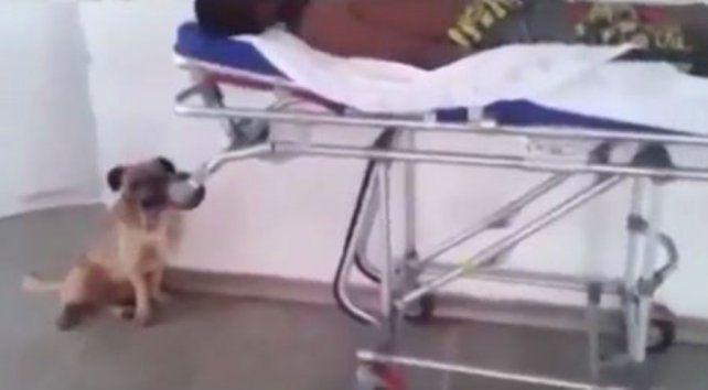 La conmovedora carrera de un perro tras la ambulancia que lleva a su dueño hasta que lo dejan subir