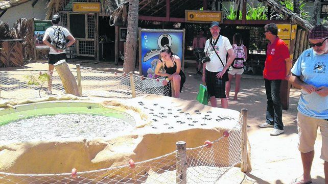 Proyecto Tamar, el santuario de las tortugas