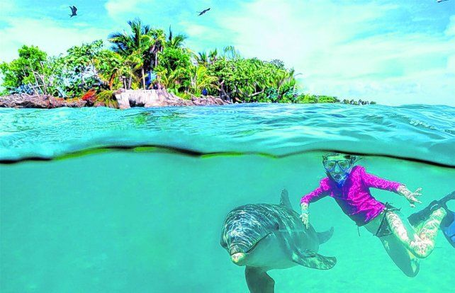 Imperdible. A pocos metros de la costa de West Bay se pueden ver peces de colores y delfines que nadan junto a las personas.