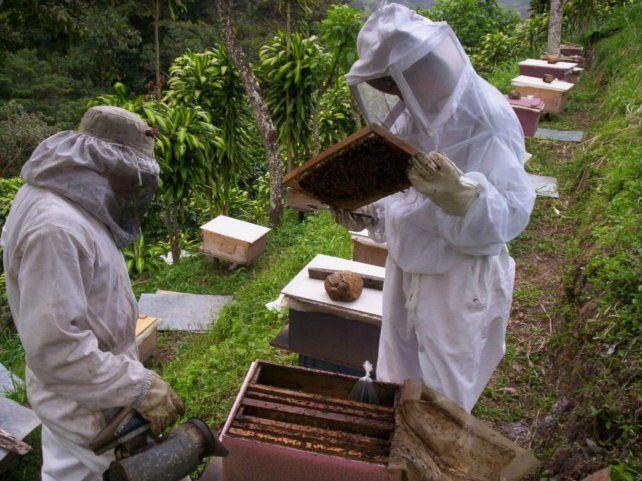 Conforman una asociación de apicultores del Nodo Rosario