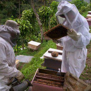 conforman una asociacion de apicultores del nodo rosario