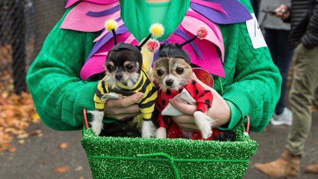 Los mejores disfraces de la Halloween Dog Parade en Nueva York