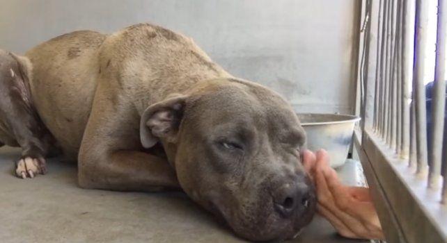 Cruz estaba alojado en un refugio de animales en California.