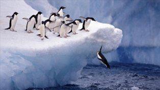Riqueza. El mar de Ross