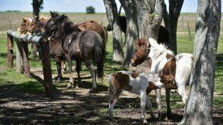 Asistidos. Los animales reciben atención veterinaria en el Campo de liberación. Algunos llegan al lugar en muy malas condiciones de salud.