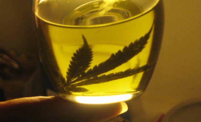 Cannabis. Piden incorporar el uso del aceite al sistema de salud provincial.
