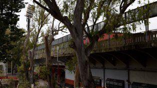 Los trabajos de extracción de árboles se iniciaron este lunes en el Coloso.