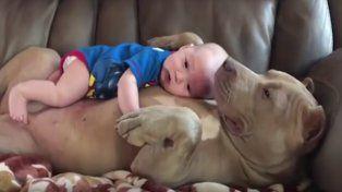 Enternecedor video de la perra que adoptó a un bebé