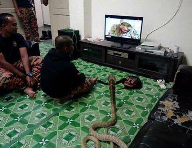 Se casó con una serpiente porque cree que es la reencarnación de su mujer