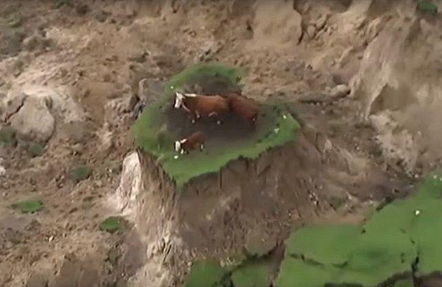 Las dos vacas y el ternero quedaron en una reducida meseta