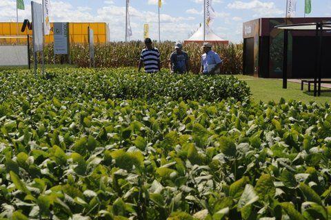 oro verde. Las ganancias de la soja llevó a muchos a sembrar en terrenos donde se quiere radicar empresas.