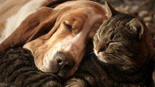 Es un final digno y feliz como merecen los animales