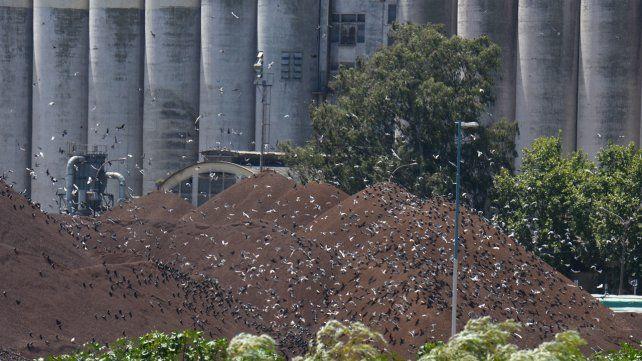 El ejecutivo destacó que el mayor problema es el contacto del excremento con las cargas de cereales.