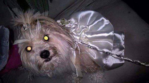 La dejaron plantada en el altar y terminó casándose con su perra