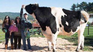 El toro más grande del mundo