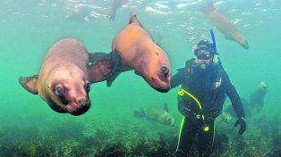 Cara a cara. Buceo con lobos marinos. Experiencia inolvidable.