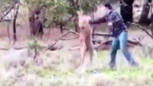 Se boxeó con un canguro para salvar a su perro
