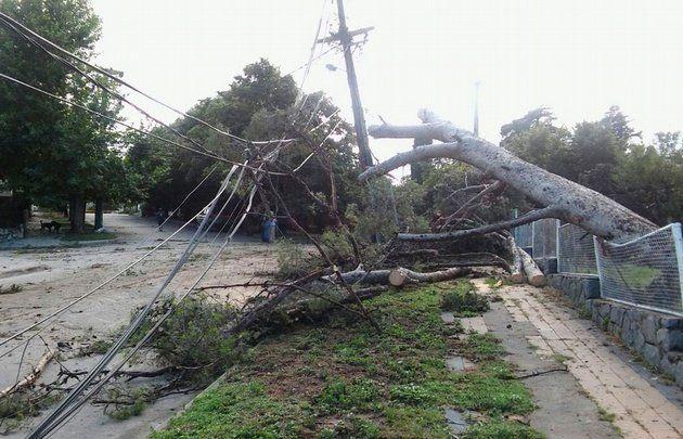 Cien árboles fueron tumbados por el paso de un fuerte tornado que azotó a La Cumbre