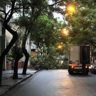 corte. La calle Urquiza, entre Corrientes y Paraguay, permaneció cortada ayer por la mañana por la caída de un árbol.