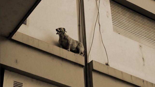 El emotivo rescate del perro que jugaba a ser equilibrista en un edificio del centro