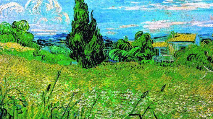 campo de trigo verde con cipreses