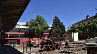 Primera etapa.El club culminó de extraer los árboles. Lo que sigue requiere un gran esfuerzo económico.