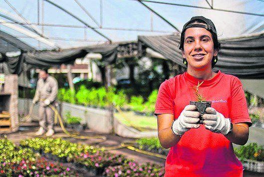 Viveros que hacen plantines e incluyen a personas con for Viveros en capital