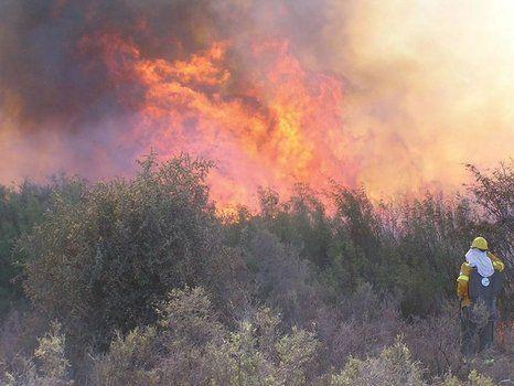 Pavoroso. Las llamas pudieron ser controladas en el sur pampeano.